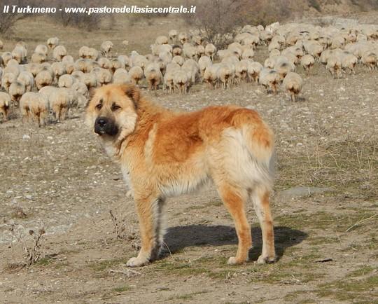 Il Mio Viaggio Nel Caucaso Georgia Alla Ricerca Del Cane Da
