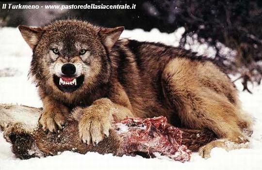 Cani da guardiania in tutta italia corsi e stage sul cane - Cosa mangia un cucciolo di talpa ...