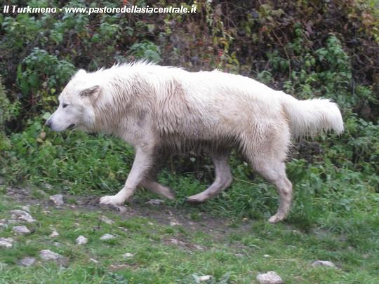 Un buon cane da pastore diventa sempre un ottimo - Foto di animali dell oceano ...