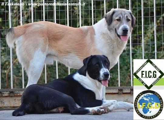 I Migliori Cani Da Guardia E Protezione Famigliare Le Razze Da